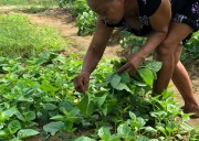 Villagers benefit from reviving natural farming practices